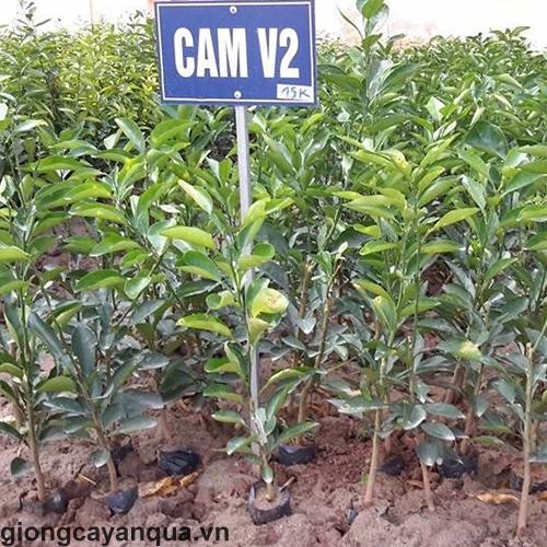 cam-v21