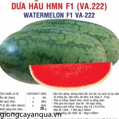 dua hau HMN F1 20gr