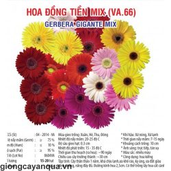 hoa-dong-tien