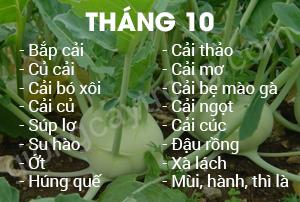 thang-10