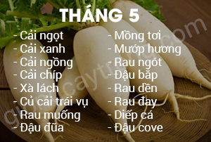 thang-5