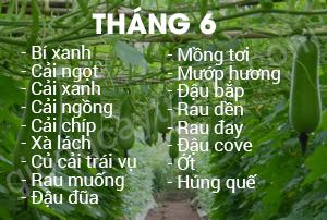 thang-6
