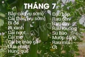 thang-7