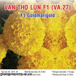 van-tho-lun-f1-va27